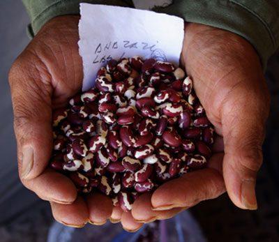 Anasazi Beans