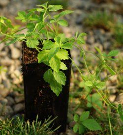 Medicinal Herb Plants
