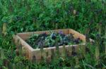 medicinal_herb_seed_r_s