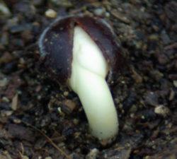 Tree & Shrub Seeds
