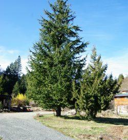 Tree & Shrub Plants