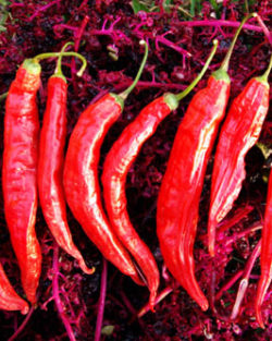 Pepper, Aji Colorado (Capsicum baccatum), packet of 50 seeds, organic