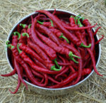 Pepper Seed Set (8 packets): Aji Colorado, Aci Sivri, Chilhuacle negro, Criolla Sella, Guajillo, Hot Paper Lantern, Thai Volcano and Romanian Sweet, organic