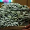 Sage, White (Salvia apiana) potted plant, organic