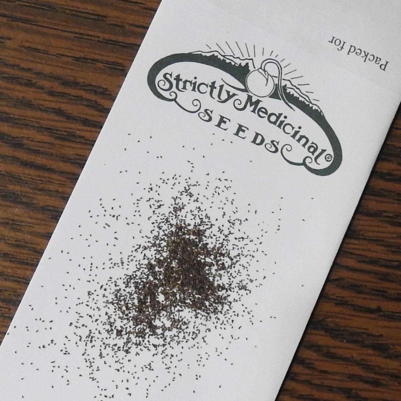 Brahmi (Bacopa monnieri), packet of 30 seeds, organic | Strictly ...