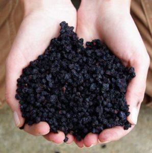 Bilberry (Vaccinium myrtillus), 50 seeds in dried berries