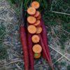 Carrot, Cosmic Purple (Daucus carota), packet of 200 seeds, organic