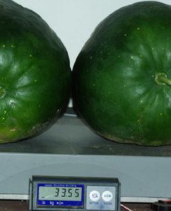 Watermelon, Moon and Stars (Citrullus lanatus), packet of 10 seeds, organic