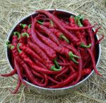 Pepper, Aji Sivri (Capsicum frutescens), packet of 30 seeds, organic