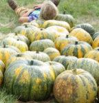 Pumpkin, Styrian Hull-less, Standard (Cucurbita pepo), packet of 20 seeds, organic