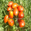 Tomato, Amish Paste (Lycopersicon esculentum), packet of 20 seeds, organic