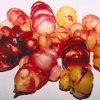 Oca, Mixed Colors (Oxalis tuberosa) potted plant, organic